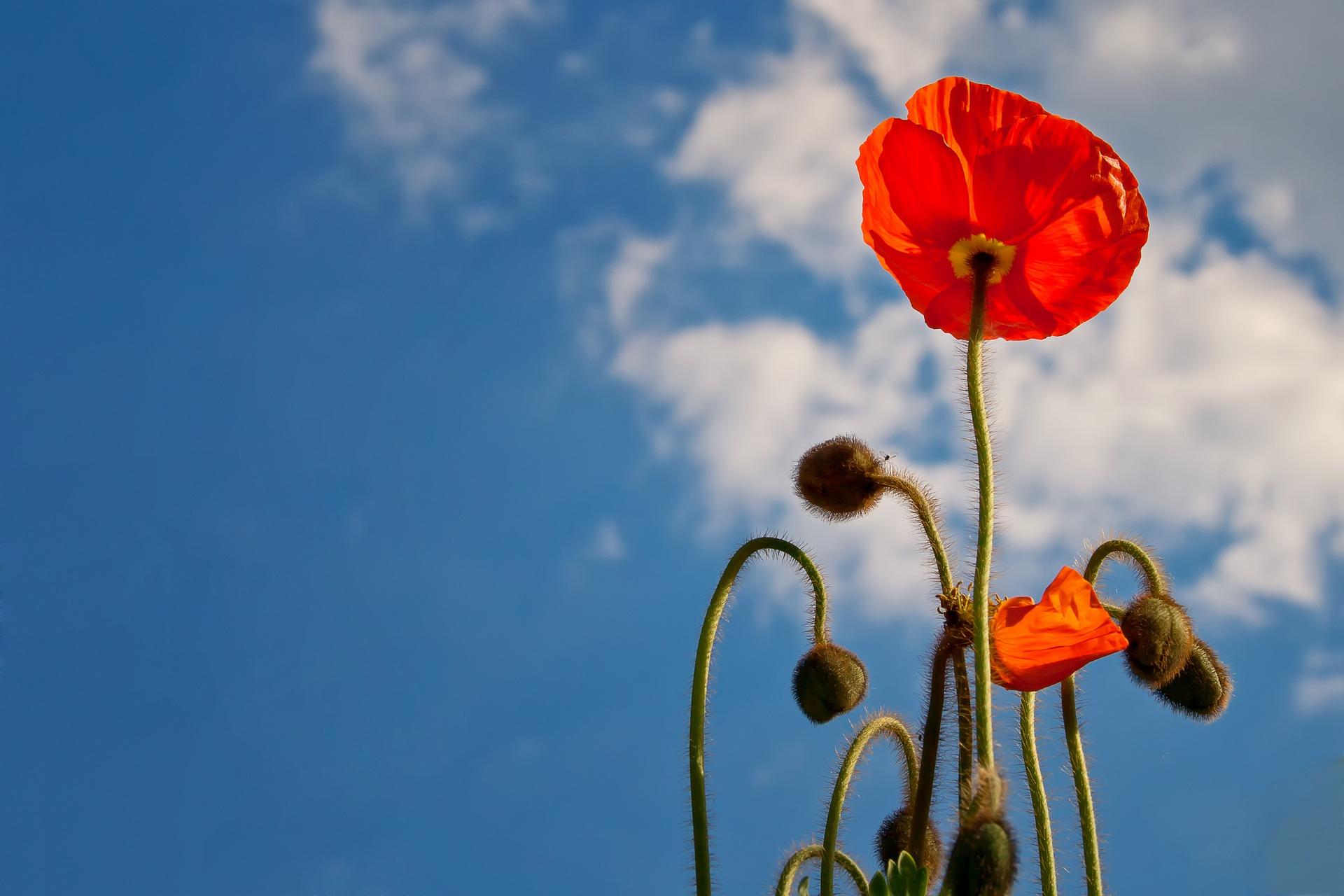 Far fiorire il cielo. Funzionalità e Improvvisazione vocale